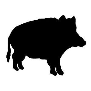 Wildschwein Nacken
