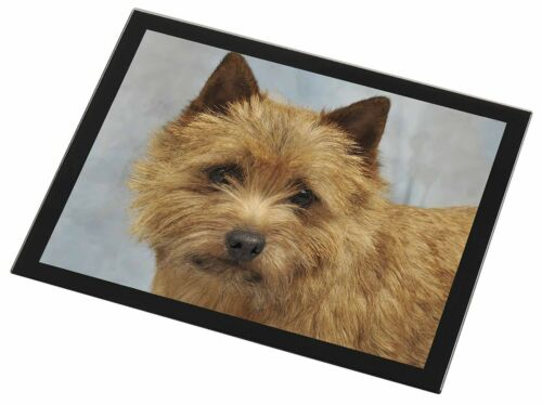 NorfolkNorwich Terrier Dog Black Rim Glass Placemat Animal Table Gift, ADNT2GP