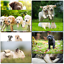 thumbnail 1 - Doodlecards Pack of 10 Standard Size Dog Lovers Birthday & Blank Cards