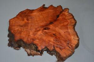 Alligator Juniper Burl Wood Slab Tables Clocks Taxidermy Stand Resaw Woodturning