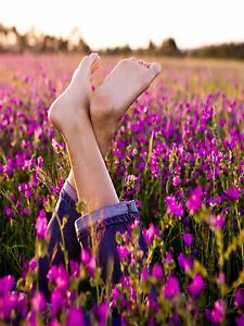 PHOTO-COMPOSITION-FLOWER-FIELD-MEADOW-RELAX-PURPLE-ART-POSTER-PRINT-LV6006