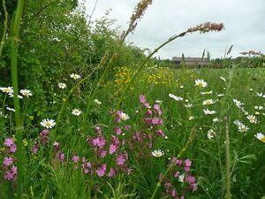 Flores Silvestres-Hedgerow Flor Mix-semi-shade - 20 G Semilla-N ° Grass  </span>