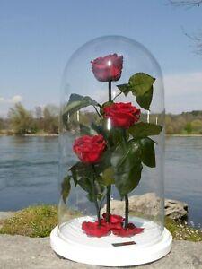 flowerbox ewige rose konservierte rose in der glasglocke xxl rose einzelst ck ebay. Black Bedroom Furniture Sets. Home Design Ideas