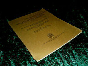 La-rato-jurassischen-Florentina-dell-039-Iran-e-Afghanistan-di-Behrouz-arjang-TB