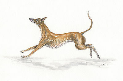 INK Painting by Bridgette Lee. Whippet Levriero DOG acquerello