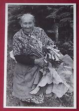 Carte postale Pontivy vieille femme rhubarbe  Quaglia limité 300 ex. postcard