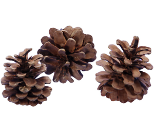10-Pine-Cones-6-8cm-For-Christmas-Wreath-Making-amp-Handmade-Decorations-Craft