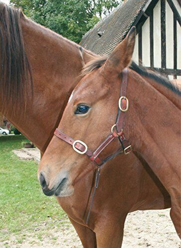 CWELL EQUINE FOAL HALTERS Head Collar Newmarket