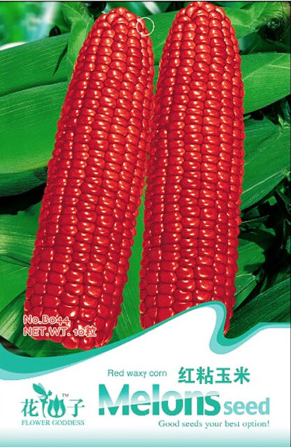 Red Waxy Corn Seeds 10 Seeds Fruit Vegetable Seed Delicious Green Food B044 Hot