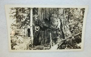 Real-Photo-Postcard-Western-Washington-Lumberjacks-9-Foot-Cedar-Tree