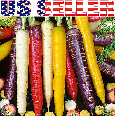 150+ ORGANICALLY GROWN Rainbow Blend Carrot Seeds Heirloom NON-GMO Flavorful
