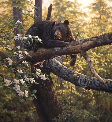 BEAR ART PRINT - Longing for Apples by Greg Alexander 13x19 Wildlife Poster