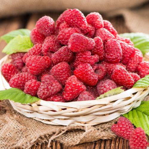 HIMBEERE Samen Süße leckere Früchte selber 2000 frischen Samen