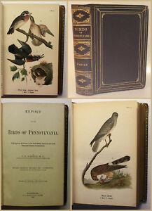 Eran-Report-on-the-birds-of-Pennsylvania-1890-ornitologia-pajaro-cliente-XY