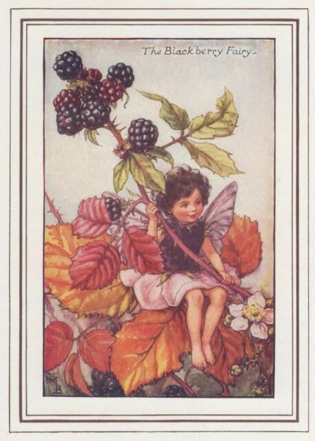 CICELY MARY BARKER c1930 THE BLACKBERRY FAIRY Painting Vintage Art Book Print