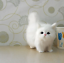 miniature 6 - Lovely-Stuffed-Plush-Toy-Simulation-Cat-Cute-Doll-Kid-039-s-Gifts-For-Christmas-New
