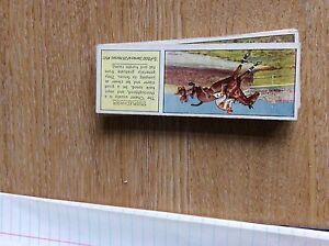 M12c-Ty-phoo-typhoo-Tea-card-horses-no-23-steeplechaser