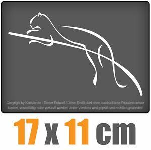 Oso-panda-idiota-17-x-11-cm-JDM-decal-sticker-coche-car-blanco-discos-pegatinas