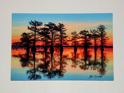 Beauty of Caddo Lake fine art digital full color metal prints color brilliance