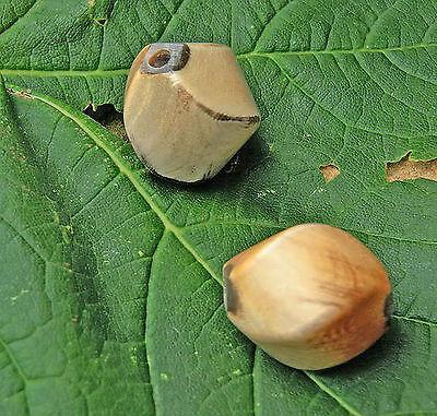 2 Stck Hornperlen gedrehte Olive 1,7x1,9cm Loch 1,6 mm Helles Rinderhorn