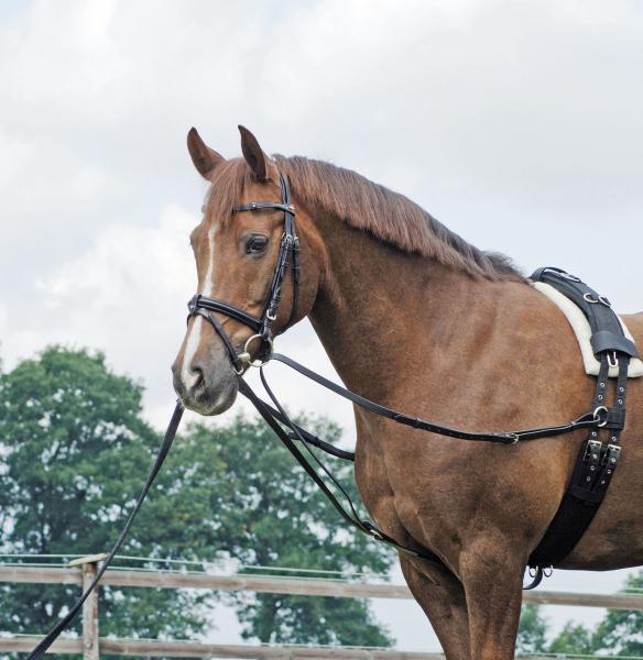 Redini Del Triangolo,Wiener Briglia,Redini da Addestramento Briglia  Basico Pony  authentic