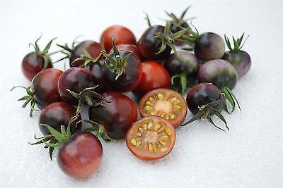 Vegetable - Tomato - Indigo Blue Berries - 10 Seeds