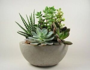 Concrete-Bowl-Planter-Pot-Light-Grey-Natural-Handmade-Modern-Home-Decor-Kitchen