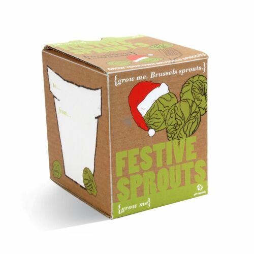 Festive Sprout Grow Me NOËL Xmas Stocking Filler Nouveauté