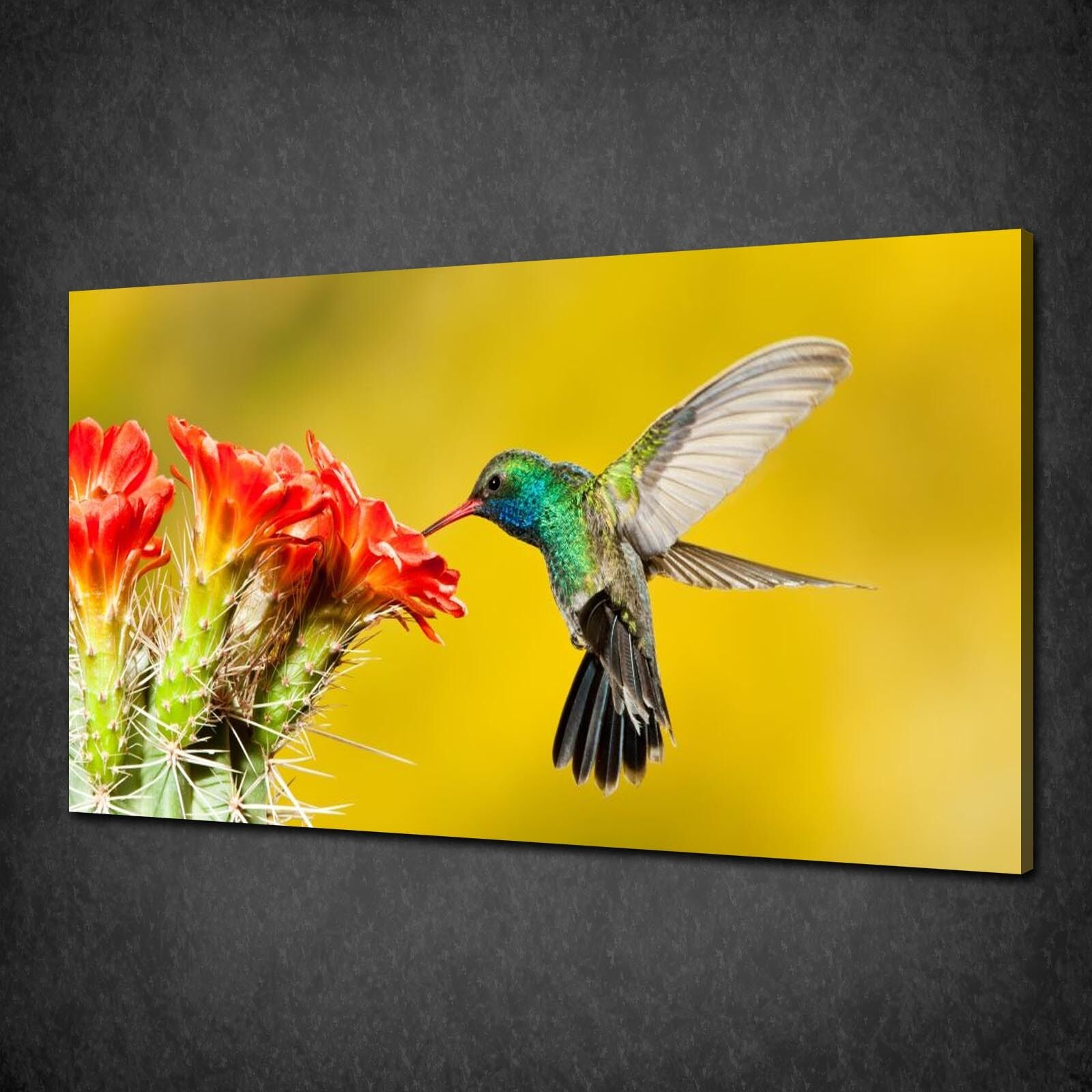 THE BROAD BILLED HUMMINGBIRD ANIMAL WALL ART CANVAS PRINT PICTURE READY TO HANG