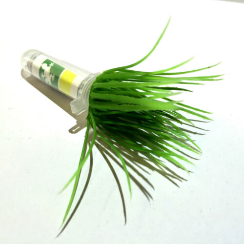 Realistic Grass Tuft Geocache NanoTube Container Logged Ready to Hide Waterproof
