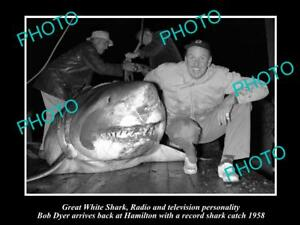 OLD-LARGE-HISTORIC-PHOTO-OF-GREAT-WHITE-SHARK-BEEN-CAUGHT-BY-BOB-DYER-c1958