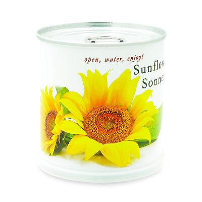 Sonnenblume Blumen in der Dose von MacFlowers
