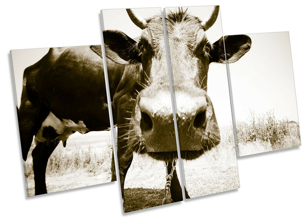 Cow Face Sepia Farm Picture CANVAS WALL ART ART WALL Four Panel 9efe46