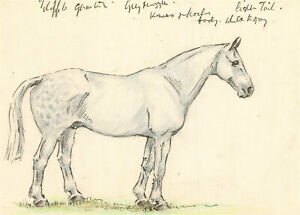 20th Century Pen and Ink Drawing - Dappled Grey Horse