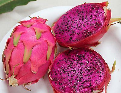 Dwarf Dragon Fruit–Pitaya - truly one of god's wonders! 10 Finest Seeds-Purple