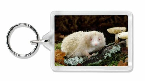 AHE-1K Albino Hedgehog Wildlife Photo Keyring Animal Gift