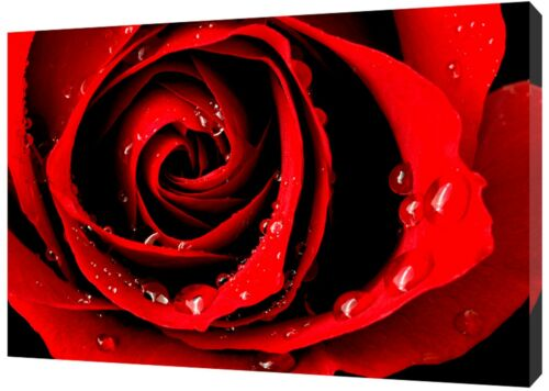 DARK RED ROSE  PICTURE  PRINT ON WOOD  FRAMED CANVAS WALL ART HOME DECORATION