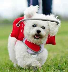 In S Halo For Blind Dogs Ebay