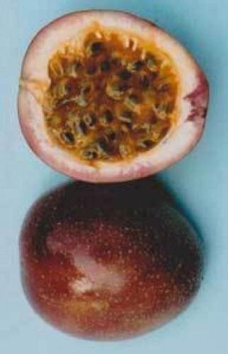 Passiflora Sweetheart 10 seeds