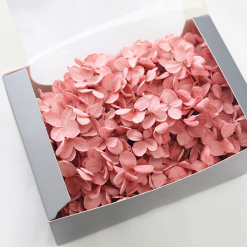 15 COLORS Dry Natural Fresh Forever Hydrangea Natural Fresh Preserved Flowers