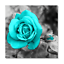 Canvas-Wall-Art-Teal-Rose-Flowers-Pictures-Wall-Decor-Prints-Painting-Framed thumbnail 1