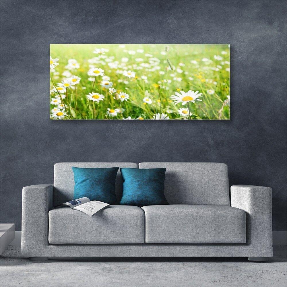 Tableau mural Image Image Image sur Plexiglas® 125x50 Nature Prairie Marguerite bf763a