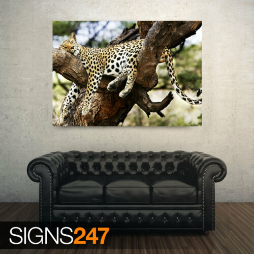 Picture Poster Print Art A0 A1 A2 A3 A4 SLEEPING CHEETAH 3503 Animal Poster