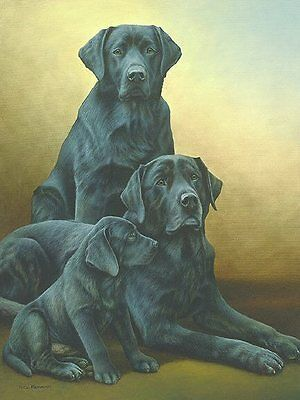 Six Pack Nigel Hemming Dog Dogs Lab Labrador Art Pets Print Poster