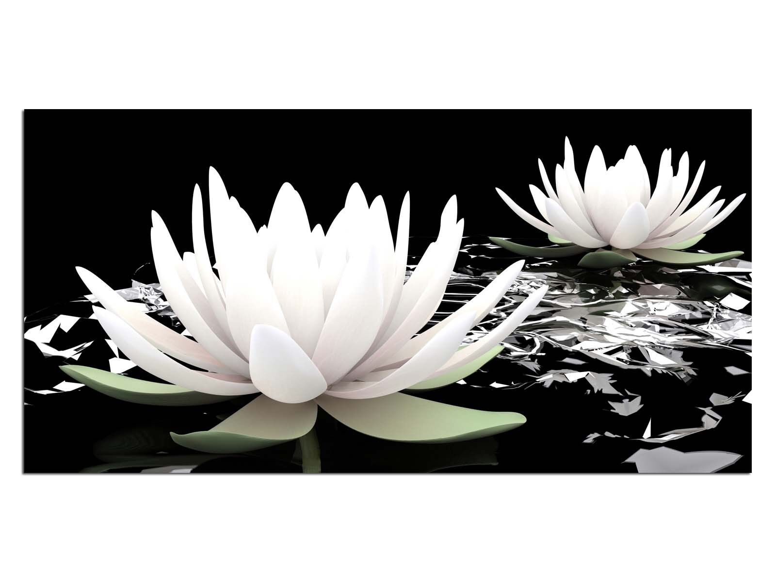 Deco Glass Picture EG4100500359 WATER LILY WATER WHITE Size 39,37  x 19,68  HD P