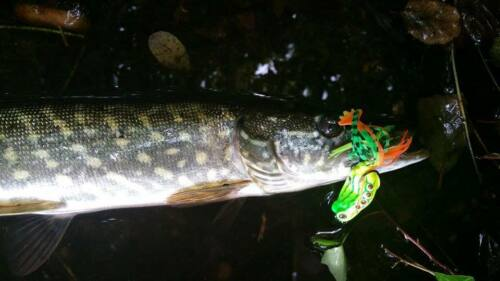 Frog top surface weed-less soft bite fishing lure FIRE FROG UK 1st class