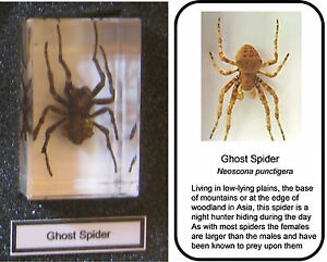 Real insects ghost spider in crystal clear resin  information card on gift box