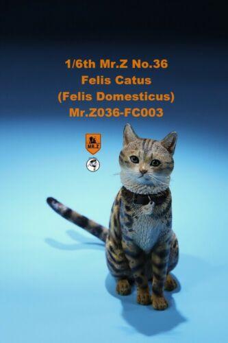 Mr.Z Animal Model MRZ036 FC003 1//6 Felis Leopard spot Domesticus Cat Figure Toys