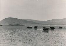 LAC TITICACA c. 1950 - Prairies Aquatiques Pérou - GF 363