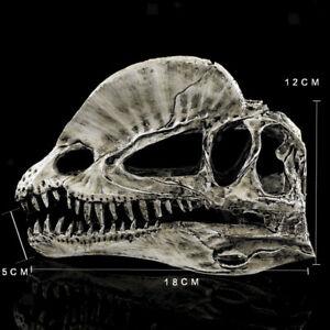 1//3 Dinosaur Dilophosaurus Resin Fossil Skull Model Collectibles White UK